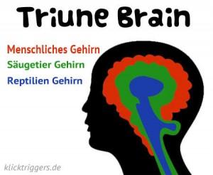 Dreieiniges Gehirn / Triune Brain